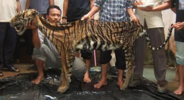 poaching.jpg